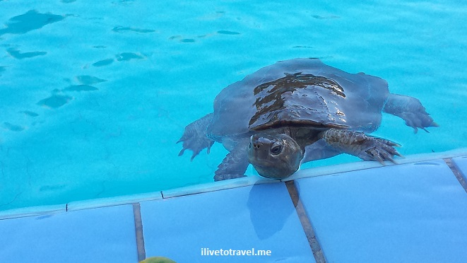 turtle, pool, photo