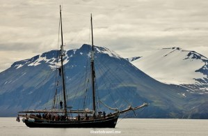 Iceland, sea, whale watching, Husavik, ship, boat, Canon EOS Rebel