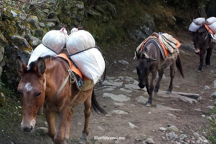 Everest Base Camp, trek, trekking, terrain, hiking, Nepal, Himalayas, outdoors, adventure, Olympus