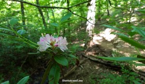Chattahoochee River Hikes:  Vickery Creek Trail in Roswell