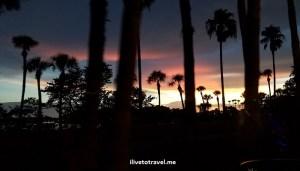 Sarasota, sunset, purple, orange, palm tree, travel, rest