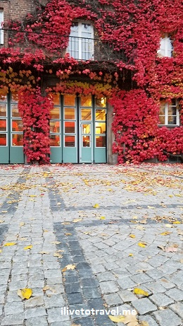 red ivy, Stockholm, Sweden, travel, explore, tourism, Samsung Galaxy