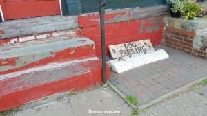 dog, parking, Burlington, vermont, curious, red