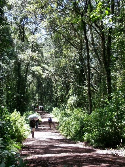 sendero, trekking, mochilero, Kilimanjaro, senderismo, hiking, tanzania, africa, aventure