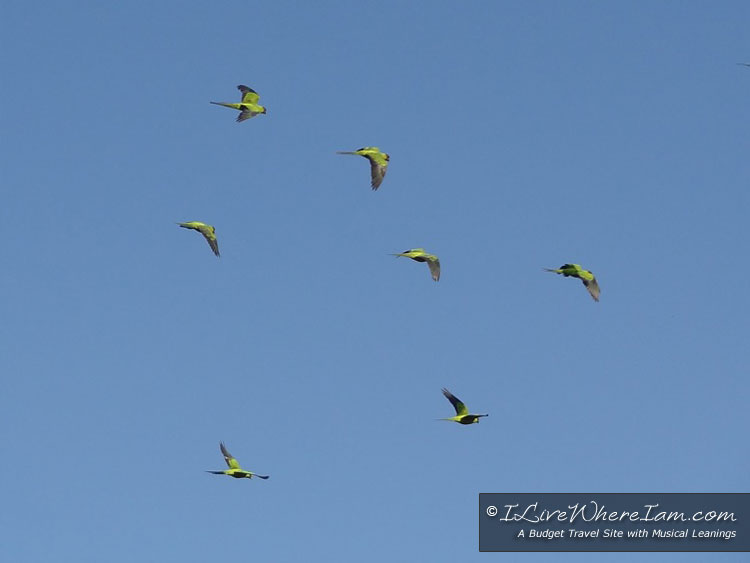 Parrots in Reserva Ecológica