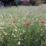 Beautiful.The wild flowers at Stanton Road Cemetery in Ilkeston look amazing, ev…