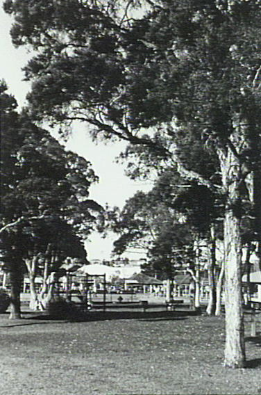 Wiseman Park, Gywnneville. P12137