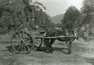 P15267 - Edwin Street (left) sitting on the family cart in Corrimal. Edwin later founded the Streets Ice Cream factory.