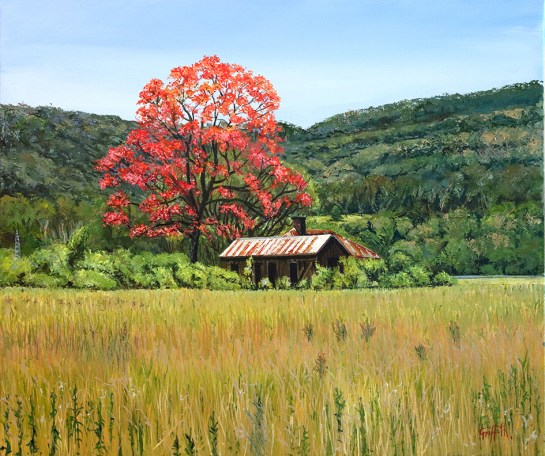 """Illawarra Flame Tree, Dapto"", by Pamela Griffith"
