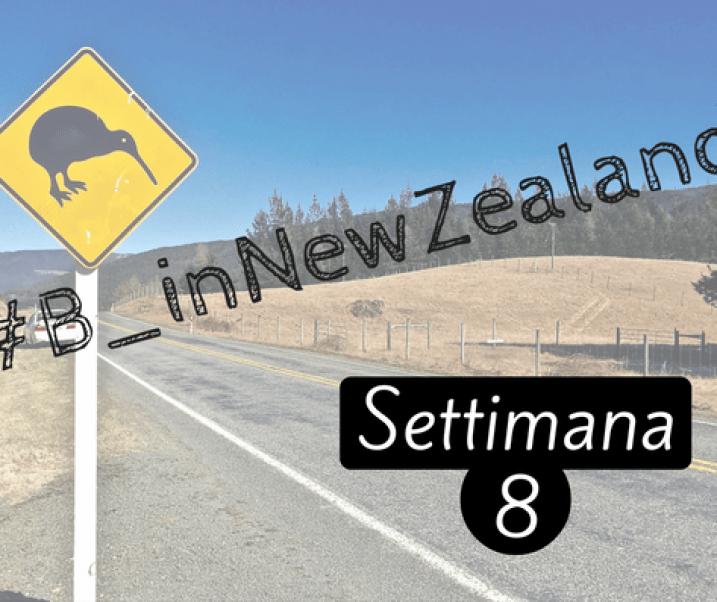 #B_inNewZealand – Settimana 8