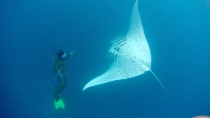 Isole Mamanuca e Yasawa - Nuotare con le mante