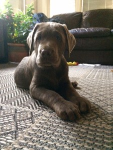 Custody of pet in a divorce