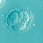 Frozen Embryos in a Divorce