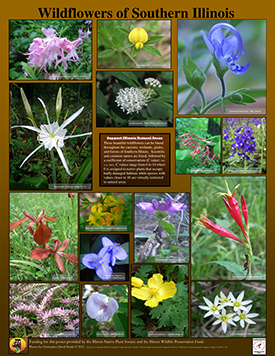Wildflowers of Southern Illinois