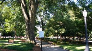 Dovetail-Partners-Raleigh-NC-Urban-Wood-Use-Study