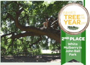 Mayors-Tree-of-The-Year-2017-second-place