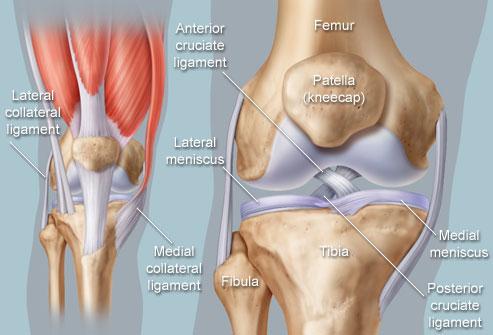 Indications/ Uses of Knee Arthroplasty