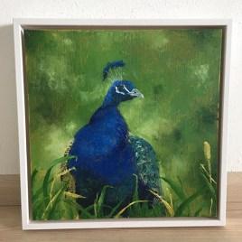 Foto schilderij pauw