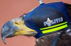 Dutch police to take down drones using Legal eagles after successful trial