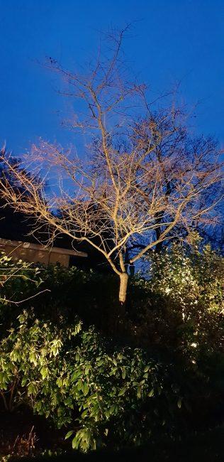 8 1 e1544615479130 - illuminating Gardens, Garden Lighting Installation Gallery