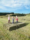 Hay, Harvest, Hay Bale