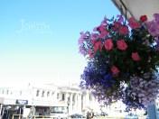 Oamaru, Flower Pot