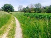 nature chemin arbre racines