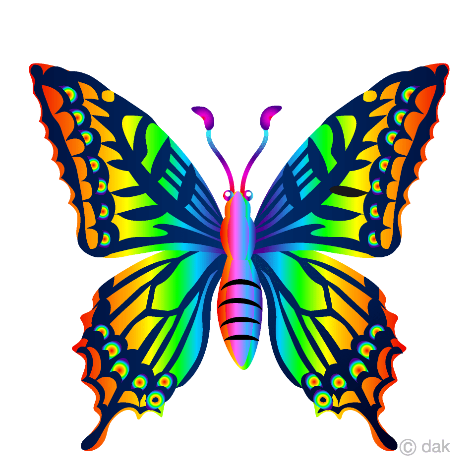 hight resolution of rainbow butterfly clipart