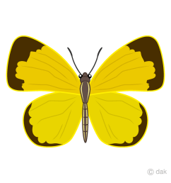 yellow butterfly clipart [ 960 x 960 Pixel ]