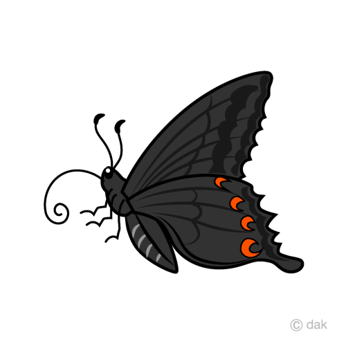 small resolution of black swallowtail butterfly clipart