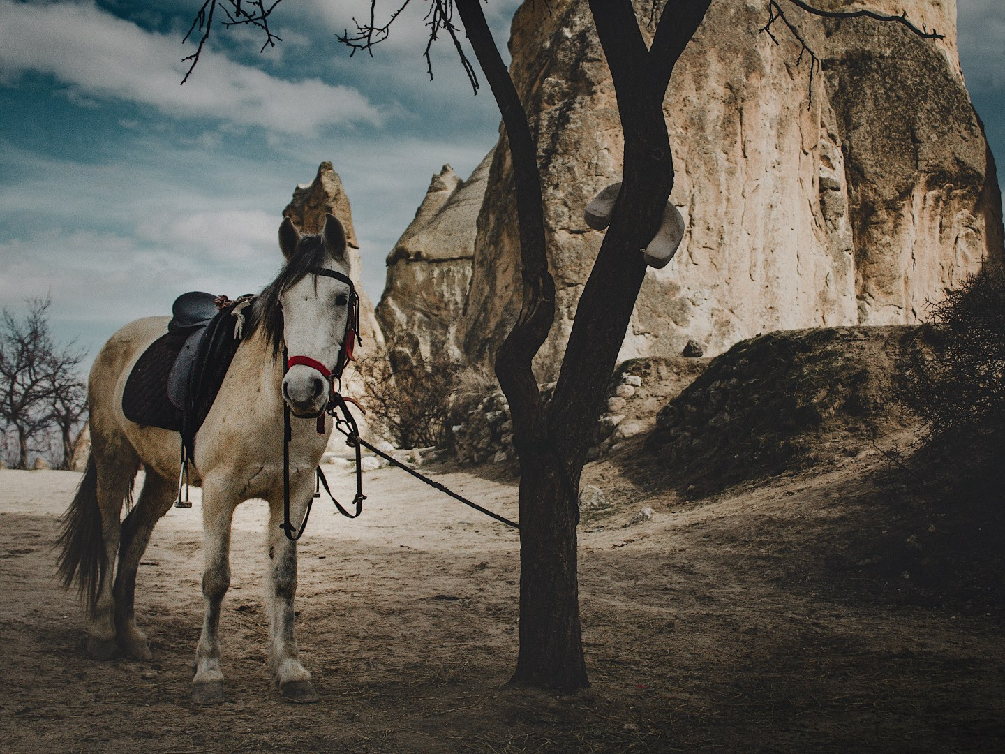 Illustrated by Sade - Horse tied to tree in Cappadocia, Goreme, Turkey