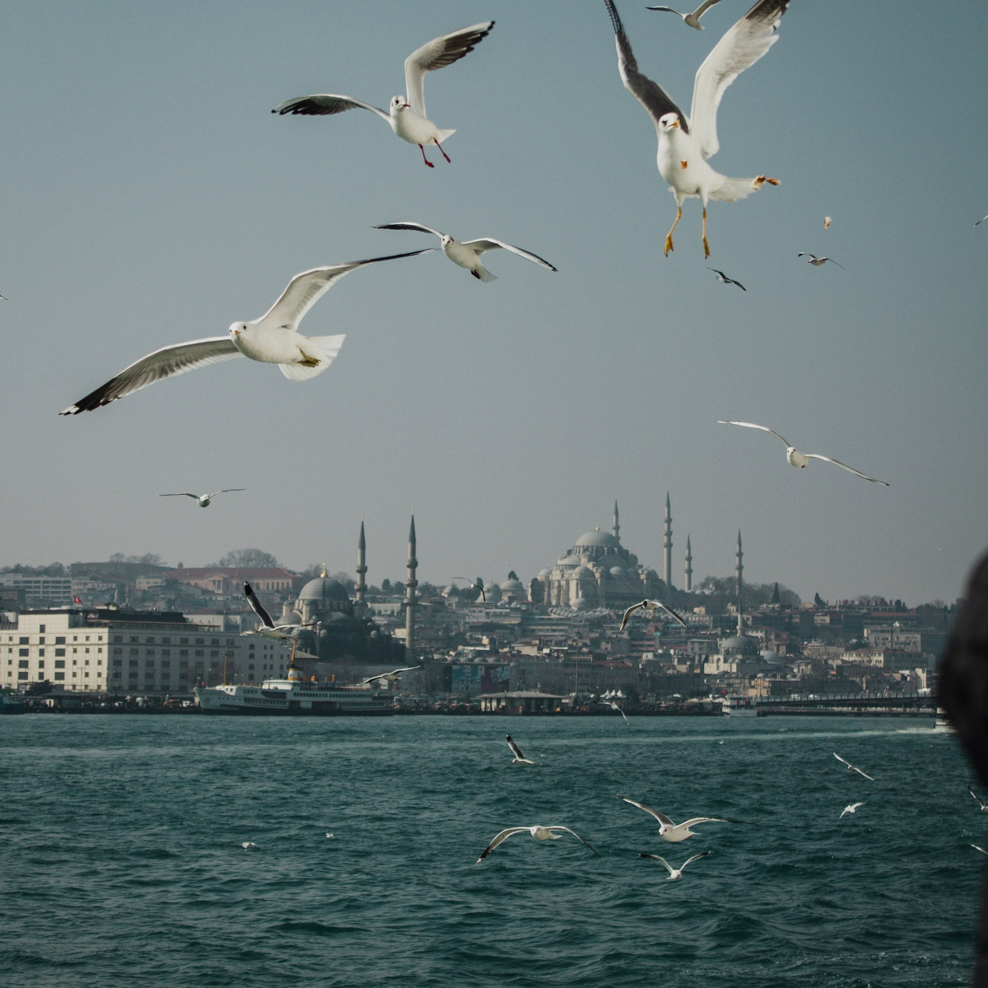 Illustrated by Sade - Sea birds flying above ferry in the Bosphorus River, Istanbul, Turkey