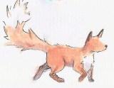 kinky tailed fox (2)