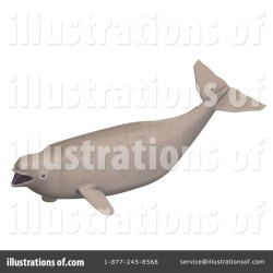Beluga Whale Clipart #1075370 Illustration by Ralf61