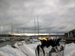The Eternal Peace Flame- Aker Brygge Oslo