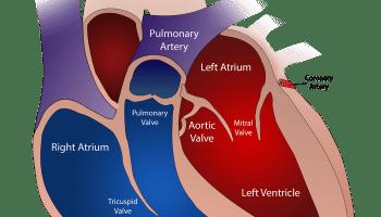 Corsa, frequenza cardiaca, formula di Tanaka e cardiofrequenzimetro | MEDICINA ONLINE