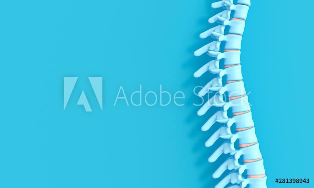 3d render image of a spine on a blue background.