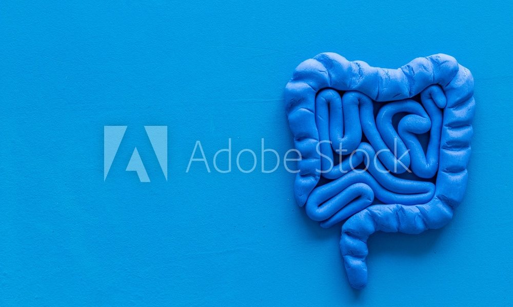 Intestines health. Guts on blue background top view copy space
