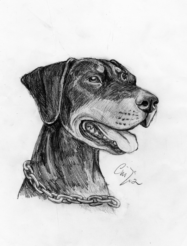 cane  Disegno Libero