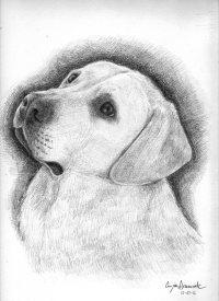 Animali | Disegno Libero....
