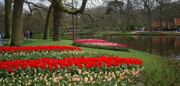 amsterdam keukenhof parco dei tulipani