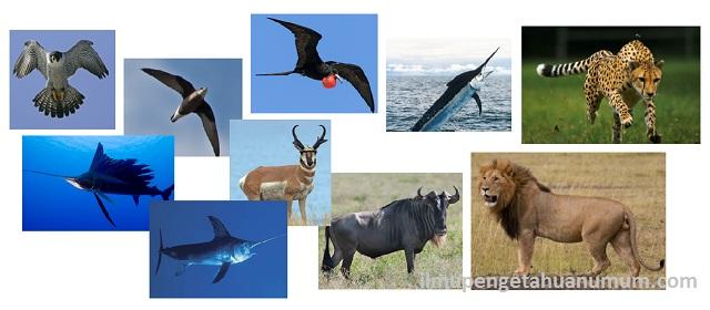 10 Hewan Tercepat di dunia