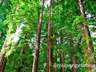 10 Negara yang memiliki kawasan hutan terbesar di Dunia
