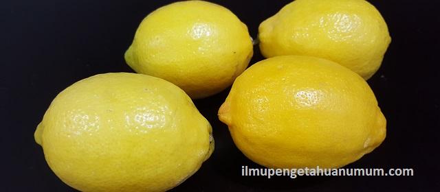 Kandungan Gizi Jeruk Lemon dan Manfaat Jeruk Lemon bagi Kesehatan