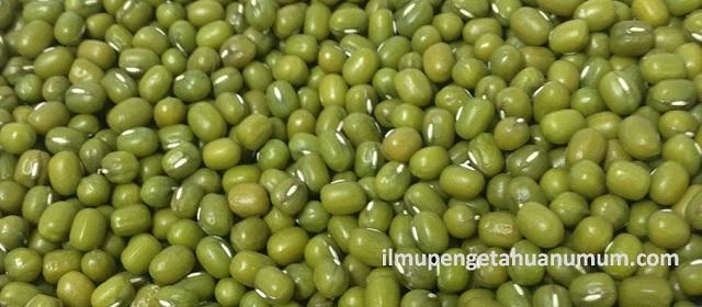 Kandungan Gizi Kacang Hijau Dan Manfaat Kacang Hijau Bagi Kesehatan