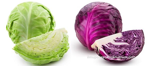 Manfaat Sayur Kol (Kubis) dan Kandungan Gizi Sayur Kol (Kubis)