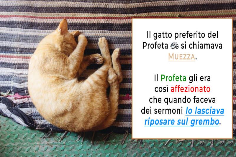 Muezza il gatto del Profeta Muhammad, Muhammad amava i gatti, Il Messaggero di Allah amava i gatti,i musulmani amano i gatti, l'Islam ama i gatti, musulmani e gatti, i gatti nell'Islam
