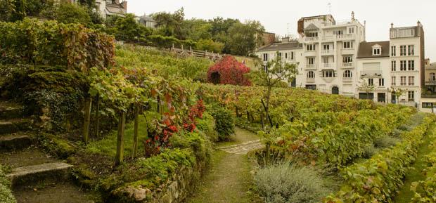 Vigne Metropolitane: Clos-Montmartre