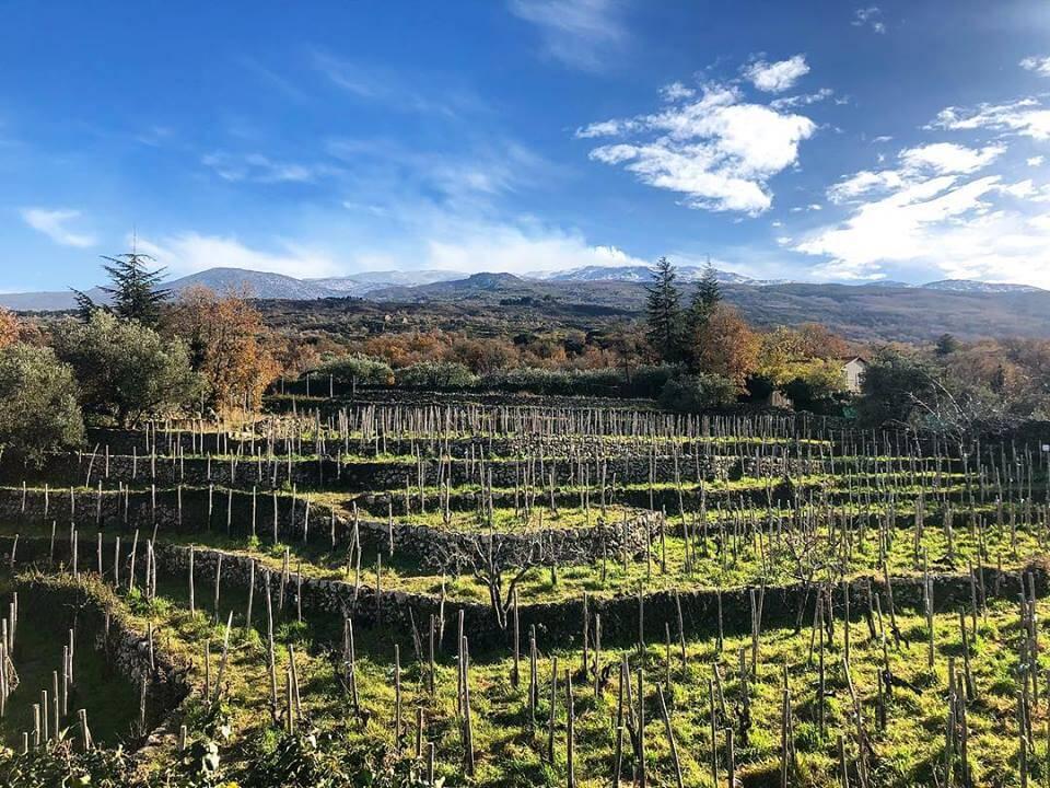 Etna: itinerario enoturistico - Terrazze dell'Etna