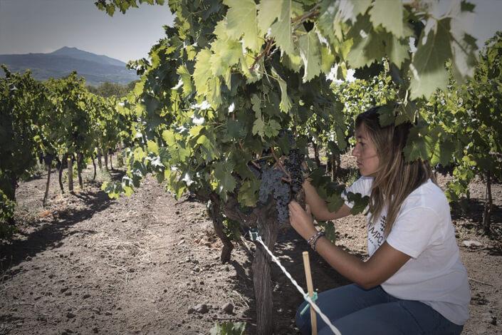 Etna: itinerario enoturistico - Camporè Wine